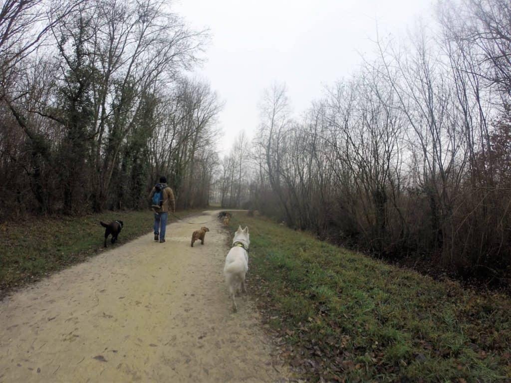 Sortie chiens libres - 18 Décembre 2016 (8)