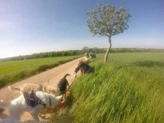 Sortie chiens libres - 23 Avril 2017 (1)