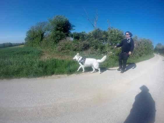 Sortie chiens libres - 23 Avril 2017 (12)