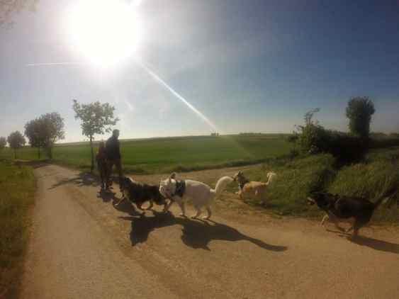 Sortie chiens libres - 23 Avril 2017 (9)