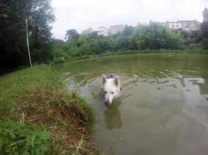 Sortie chiens libres - 25 Juin 2017 (21)