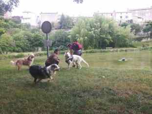 Sortie chiens libres - 25 Juin 2017-Bis (17)