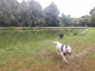 Sortie chiens libres - 25 Juin 2017-Bis (18)