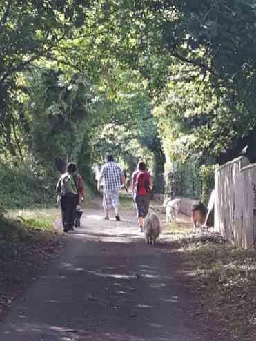 Sortie chiens libres - 25 Juin 2017-Bis (5)