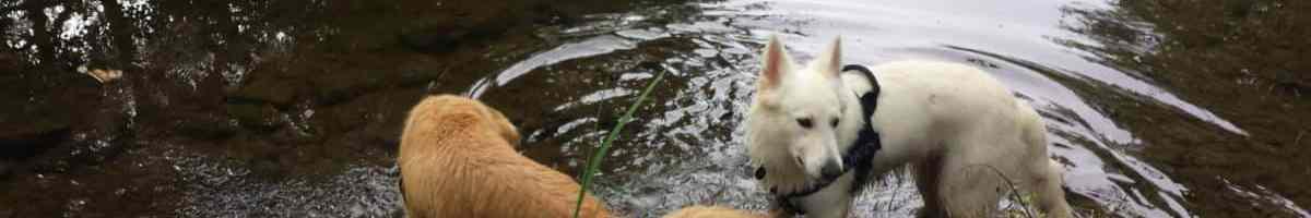 Sortie chiens libres – 17 Septembre 2017 – Moulin de Candé (79)