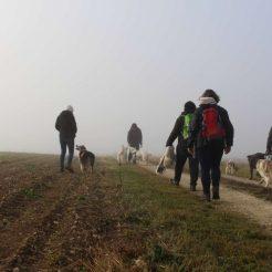 Sortie chiens libres - 19 Novembre 2017 (2)
