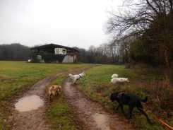Sortie chiens libres - 17 Décembre 2017 (1)