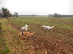Sortie chiens libres - 17 Décembre 2017 (16)