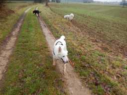 Sortie chiens libres - 17 Décembre 2017 (17)