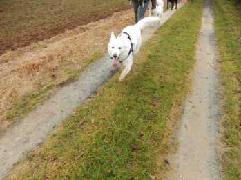 Sortie chiens libres - 17 Décembre 2017 (19)