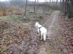 Sortie chiens libres - 17 Décembre 2017 (23)