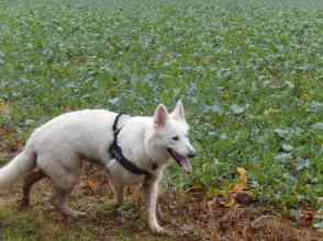 Sortie chiens libres - 17 Décembre 2017 (39)