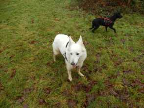Sortie chiens libres - 17 Décembre 2017 (43)