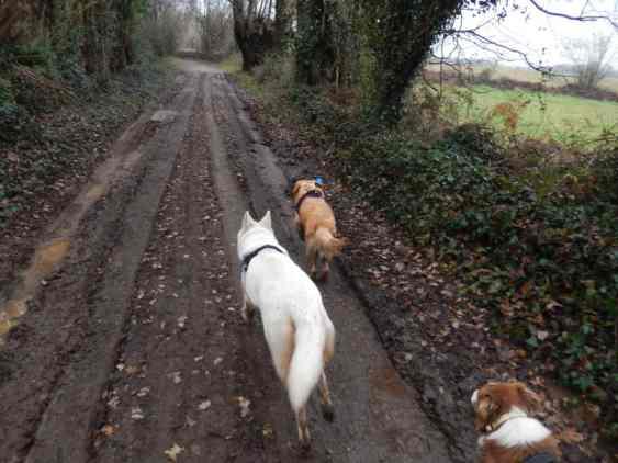 Sortie chiens libres - 17 Décembre 2017 (50)