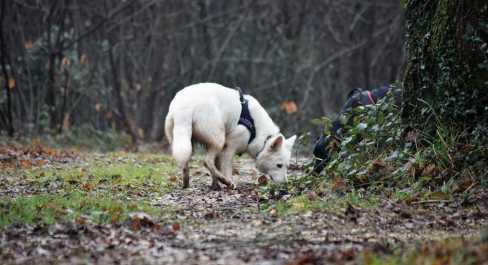 Sortie chiens libres - 17 Décembre 2017 (56)