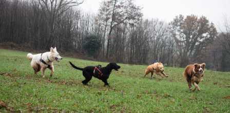 Sortie chiens libres - 17 Décembre 2017 (57)