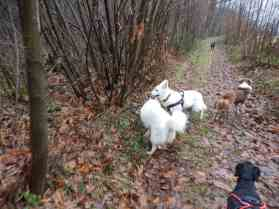 Sortie chiens libres - 17 Décembre 2017 (8)