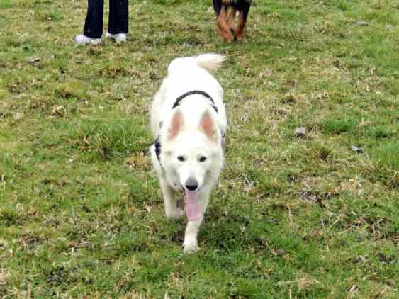 Sortie chiens libres - 28 Janvier 2018 (34)