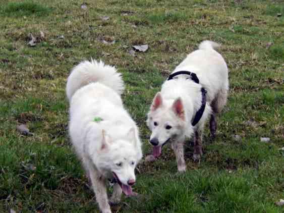Sortie chiens libres - 28 Janvier 2018 (40)