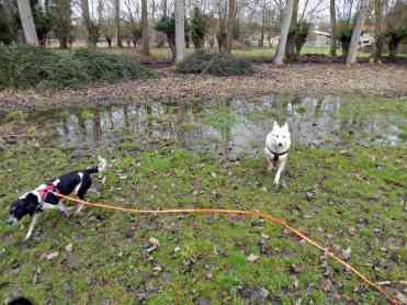 Sortie chiens libres - 28 Janvier 2018 (45)