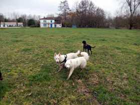 Sortie chiens libres - 28 Janvier 2018 (50)