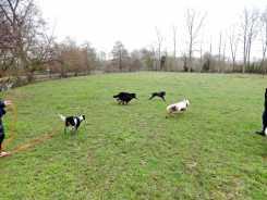 Sortie chiens libres - 28 Janvier 2018 (54)