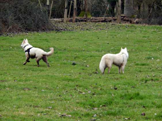 Sortie chiens libres - 28 Janvier 2018 (64)