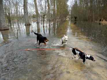 Sortie chiens libres - 28 Janvier 2018 (8)