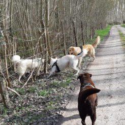 Sortie chiens libres - 25 Mars 2018 (33)