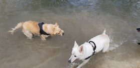 Sortie chiens libres - 25 Mars 2018 (41)