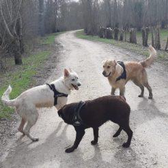 Sortie chiens libres - 25 Mars 2018 (45)