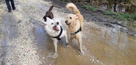 Sortie chiens libres - 25 Mars 2018 (5)