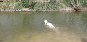 Sortie chiens libres - 25 Mars 2018 (57)
