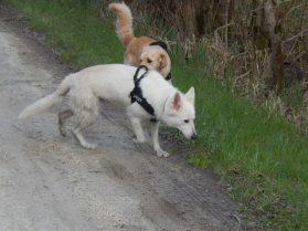 Sortie chiens libres - 25 Mars 2018 (63)