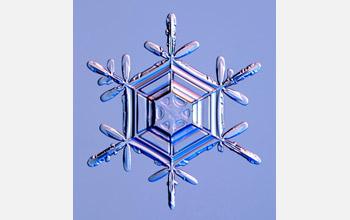 stellar dendrite snow crystal