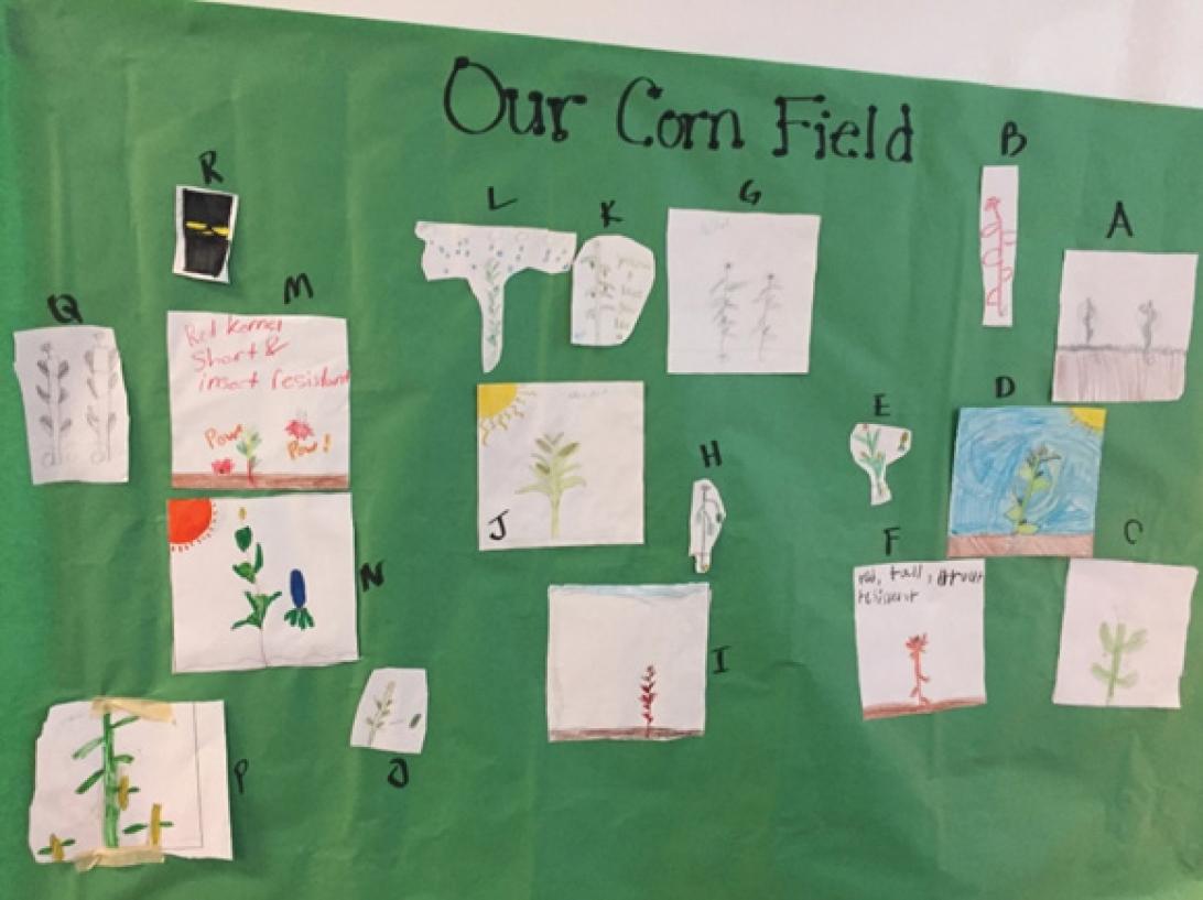 hight resolution of Decoding the Corn Field   NSTA