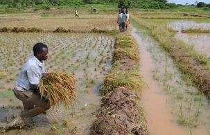 Image result for irrigation in nigeria