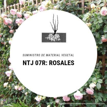 NTJ 07R Rosales