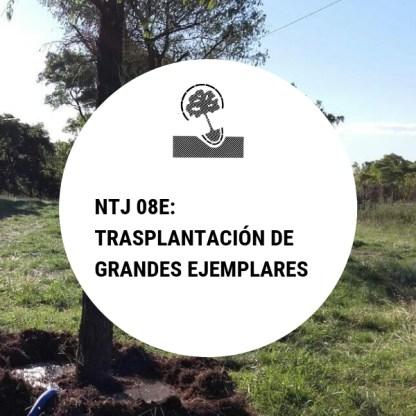 NTJ 08E Trasplantación de grandes ejemplares