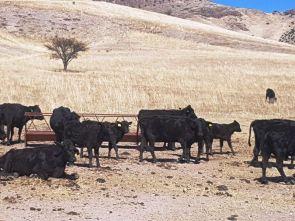 Ranchos-Balleza-12