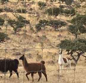Ranchos-Balleza-6