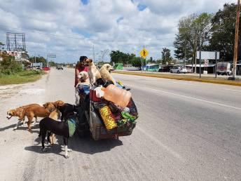Nayarita viajero que apoya perritos callejeros