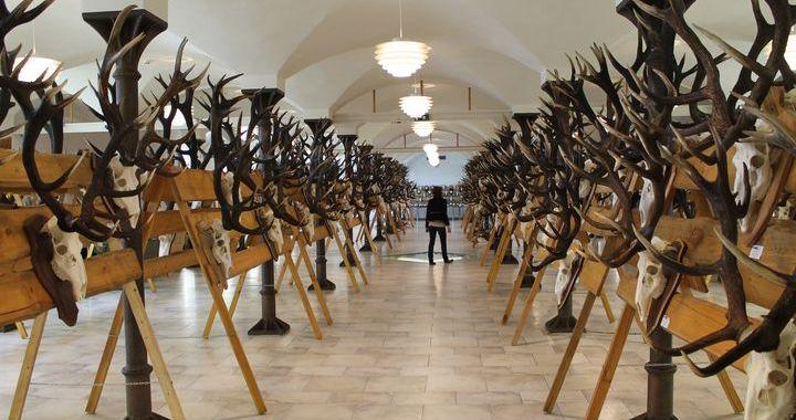 Jaunmoku pilī skatāma Latvijas medību trofeju izstāde /FOTO/