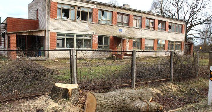 Slampes centrā nozāģē simtgadīgu koku