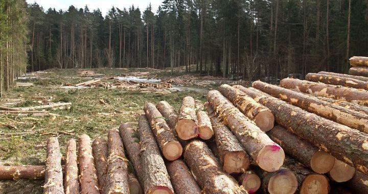 Elektrolīnijas ierīkošanas dēļ pie Tukuma sākta koku ciršana