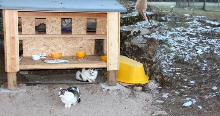 Kandavā uzstādīta kaķu mājiņa