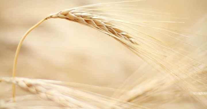Par laukiem un lauksaimniecību
