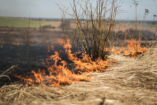 Zemgales reģionā pirmais kūlas ugunsgrēks – Engurē