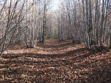 bosqueabbadiasansalvatore-nubesviajeras