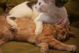 Sidy Bou and Séa taking a snooze at Cat Cafe MTL